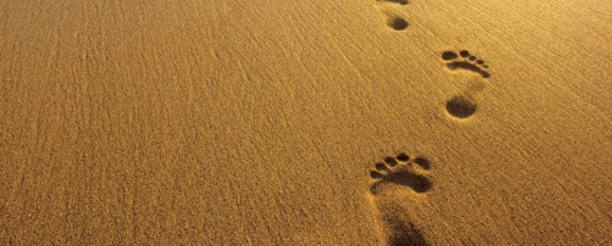 Footprints in the sand 2