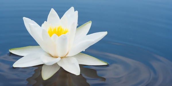 Meditation Instructor Part 1:  August 2-12